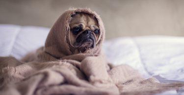 Ongezonde Hondenrassen